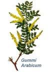 Gummi Arabicum 40 g