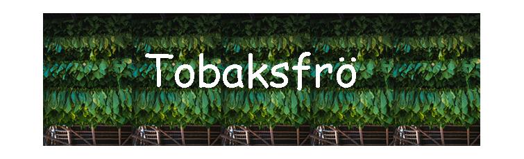 Odla din egen tobak med tobaksfröer från Tilbudet. Hybridsorter med bra resistens mot sjukdommar